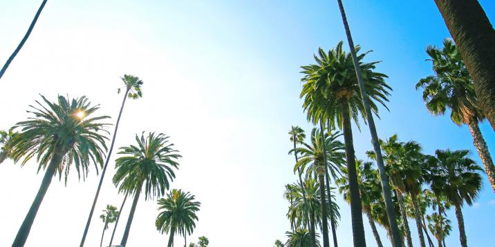 Palm trees in West Hollywood stretching toward a blue, cloudless sky